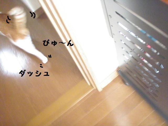 20100113_395