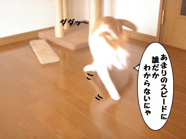 20100310_113