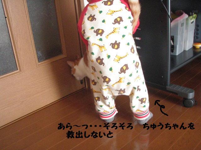 20100311_402
