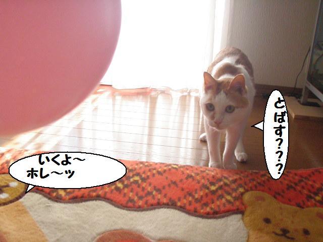 20100314_44