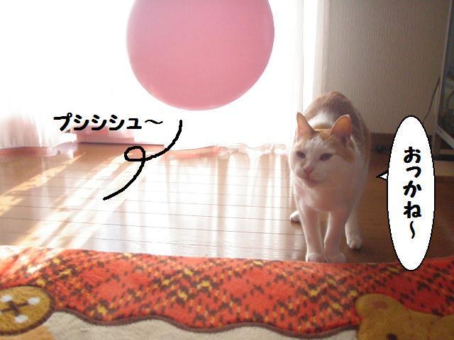 20100314_45_2
