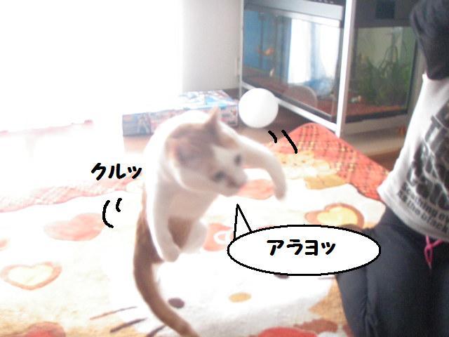 20100322_50_2
