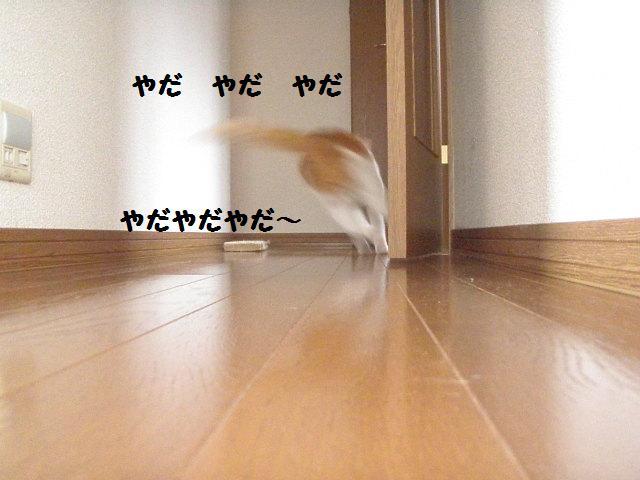20100404_15