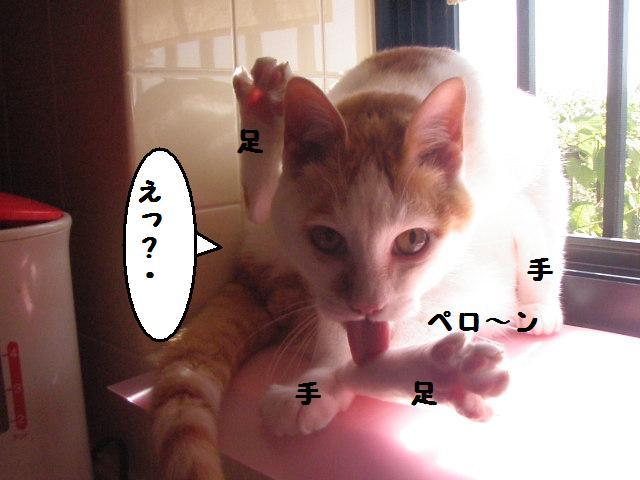 20100521_37