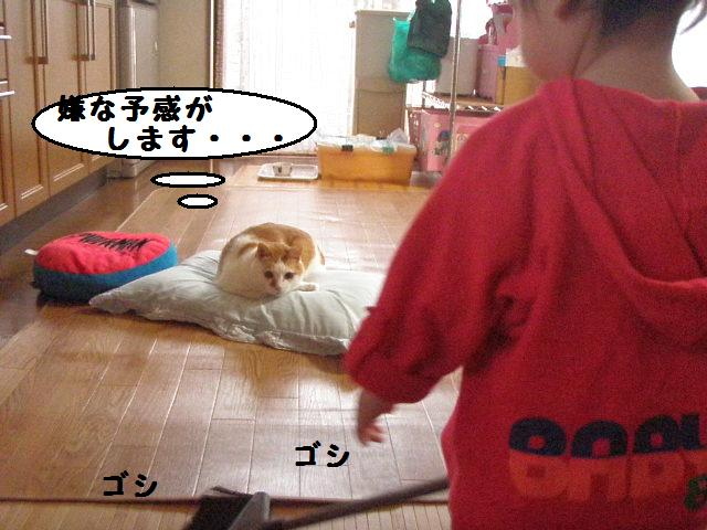 20100523_295_2