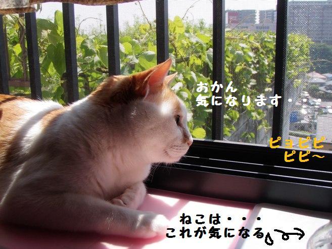 20100602_04