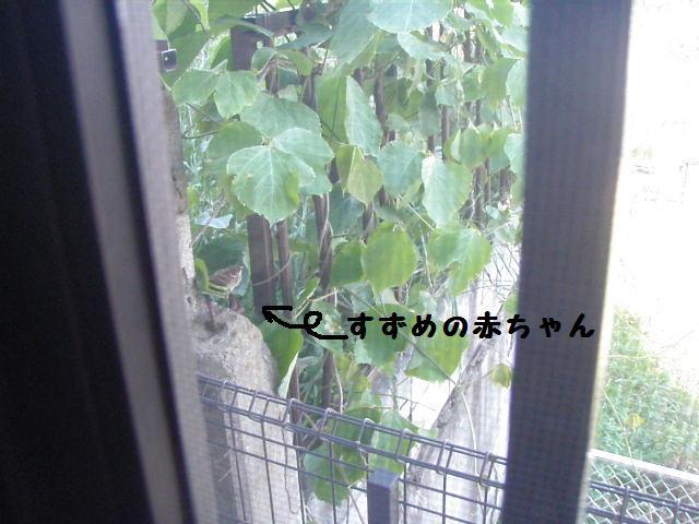 20100603_22