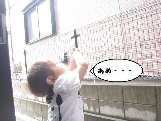 20100614_654