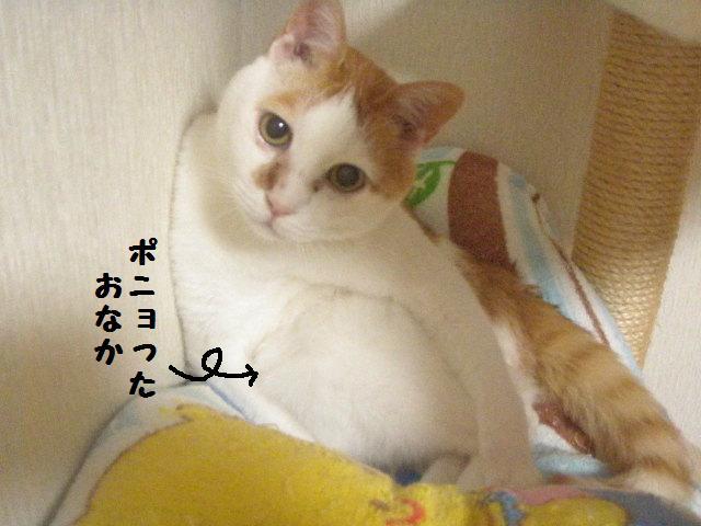 20100624_03