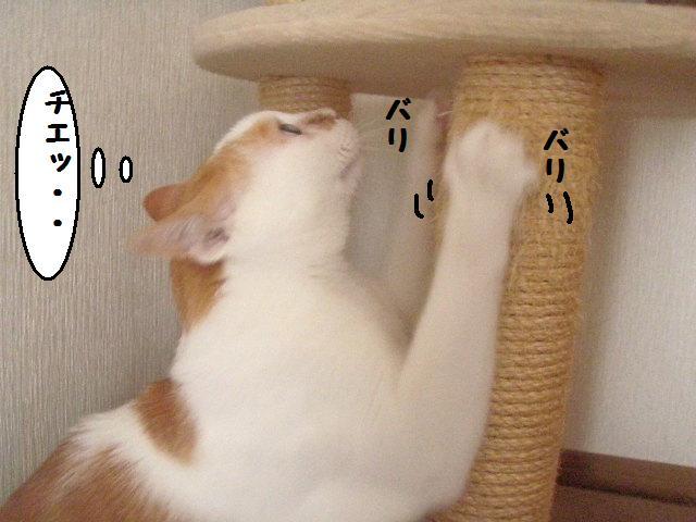 20100629_115