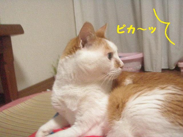 20100629_34