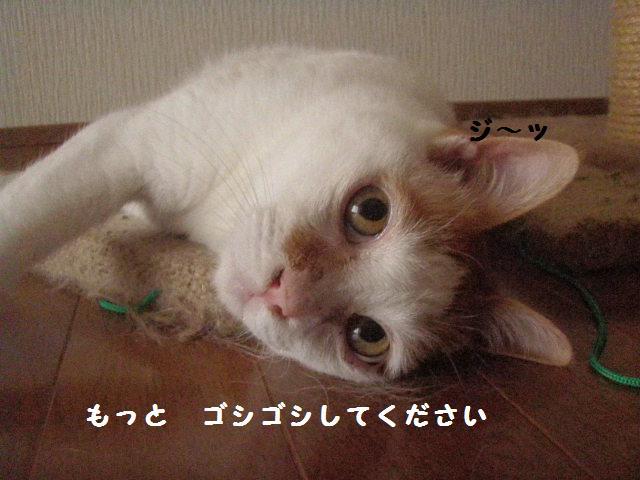 20100709_20
