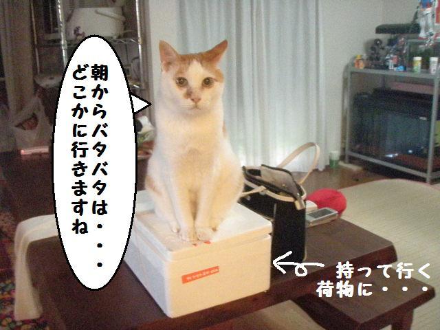20100711_01_2