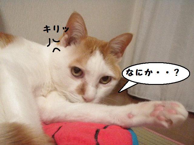 20100603_20_01