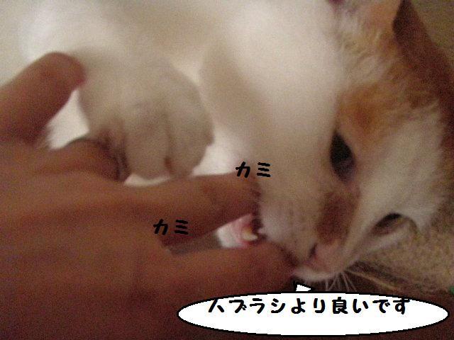 20100709_60