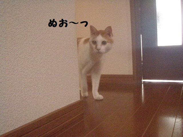 20100810_33