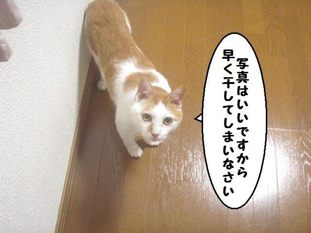 20100810_61_01