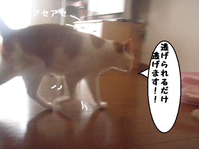 20100810_18