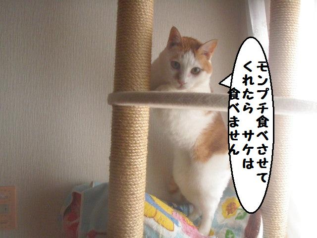 20101015_144
