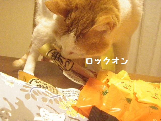 20101015_52_01